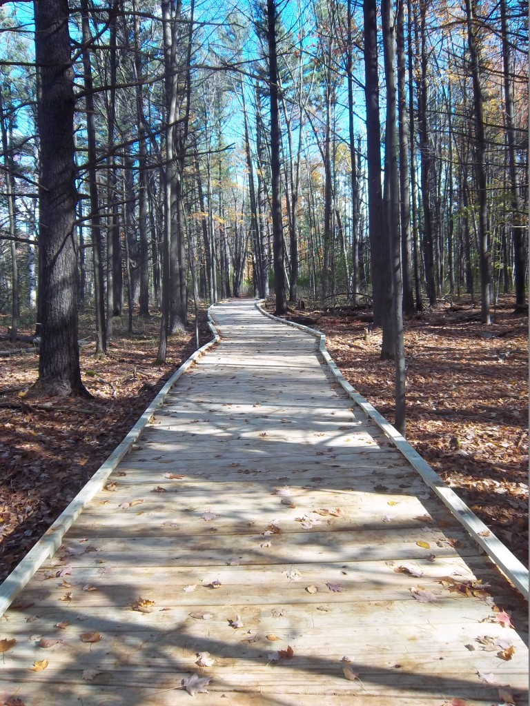 Boardwalk in Schmeeckle Reserve