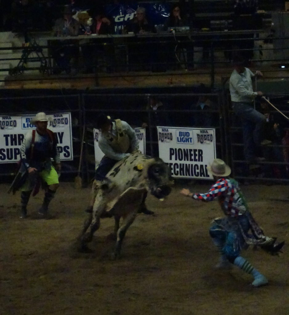 A cowboy hanging on to the bull at the Northern Rodeo Association finals.